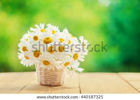 Bouquet of camomile flowers on wood table in nature green background, in summer morning. - stock photo