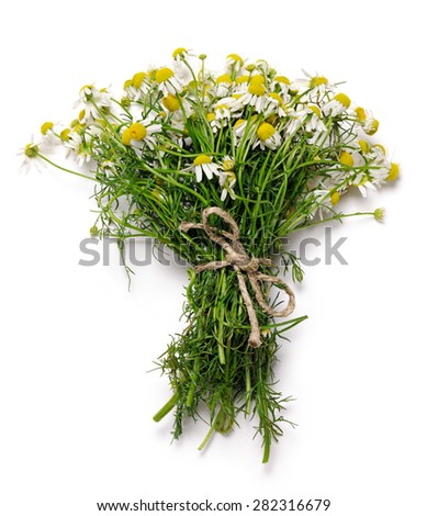bouquet of chamomile flowers - stock photo