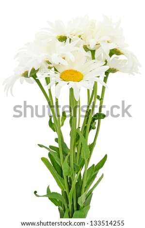 Bouquet of chamomile flowers isolated on white background - stock photo