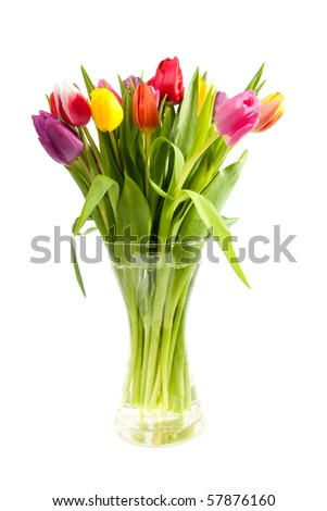 bouquet of colorful Dutch tulips in vase over white background - stock photo