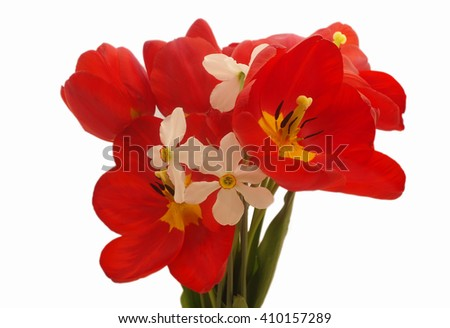 bouquet of colorful spring flowers of tulips on a pure white background. - stock photo