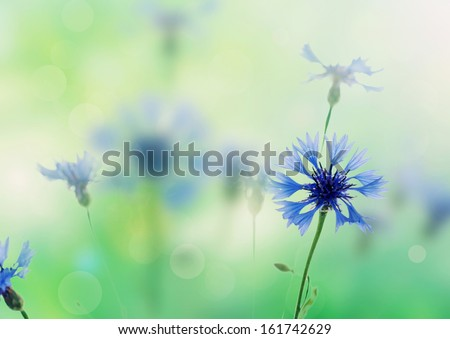 Bouquet of cornflower flowers  with green bokeh and copy space,  floral abstract background - stock photo