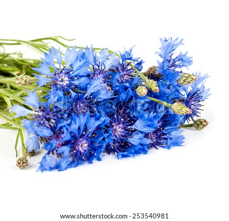 bouquet of cornflowers on a white background - stock photo