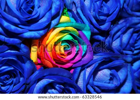 bouquet of creative colored roses (Rainbow rose) - stock photo