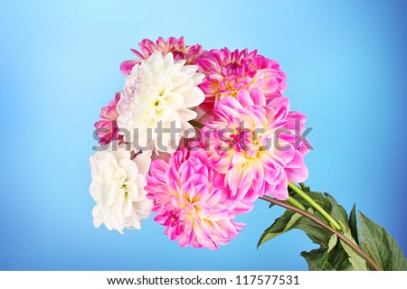 Bouquet of dahilas on color background