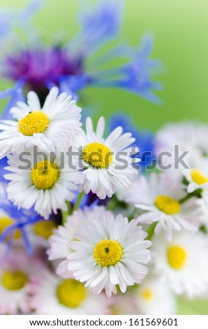 Bouquet of daisies and cornflowers close-up - stock photo