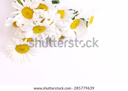 bouquet of daisies on a white background wildflowers selective soft focus