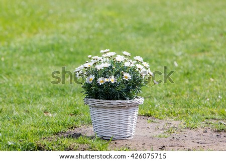 Bouquet of daisy flowers in a basket on a field of grass - stock photo