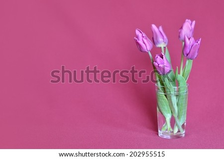 bouquet of dark pink tulips, on burgundy background in a glass of water