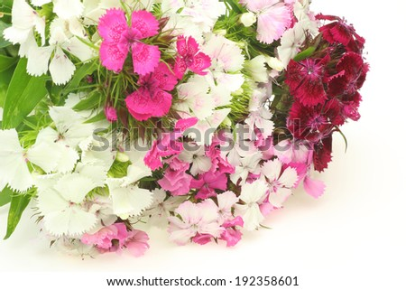 Bouquet of dianthus in a white background