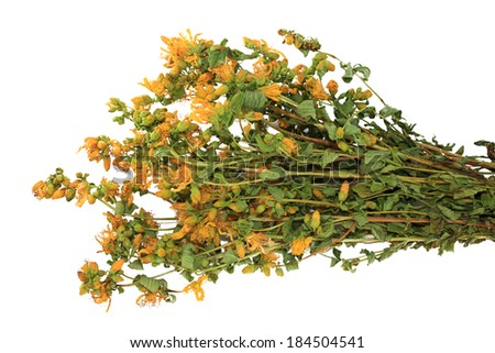 Bouquet of dried herb Hypericum perforatum on white background - stock photo
