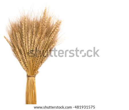 Bouquet of ears of wheat on white background
