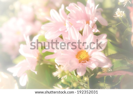 Bouquet of flower with soft filter - stock photo