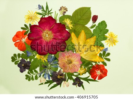 Bouquet of flowers on a light background. Pressed, dried rosehip , pumpkin, geranium, violet, dandelion, clover and lupine.  - stock photo