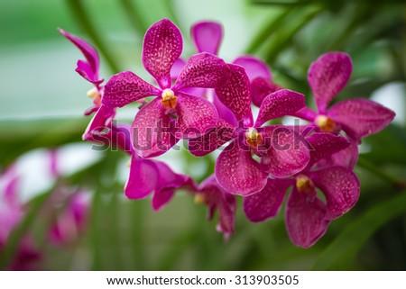 Bouquet of flowers orchids. Bouquet of flowers orchids. - stock photo