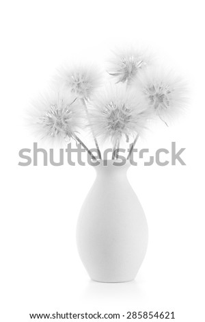 Bouquet of fluffy dandelions in vase isolated on white background. Black and white image, high key. - stock photo