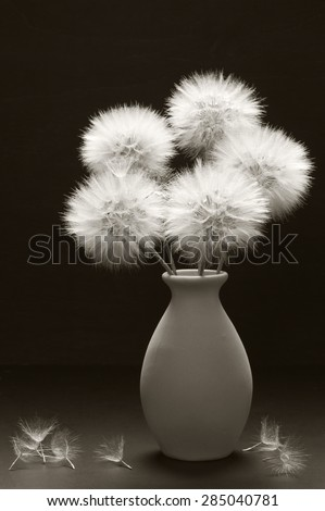 Bouquet of fluffy dandelions in vase on dark background. Sepia toned image. - stock photo