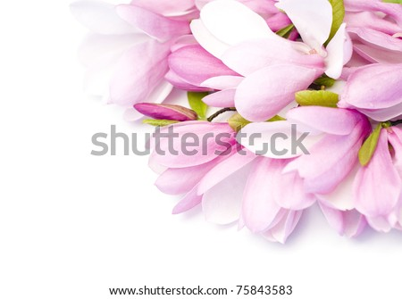 Bouquet of fresh magnolia flowers close-up - stock photo