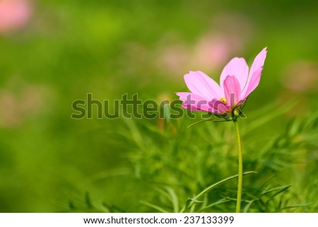 Bouquet of fresh pink flowers in garden. - stock photo