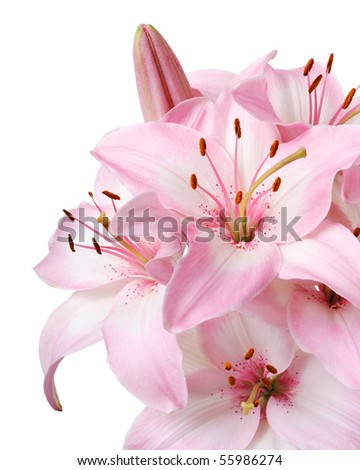 Bouquet of fresh pink lilies isolated on white - stock photo
