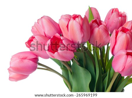 Bouquet of fresh pink tulips on a white background isolated, close-up