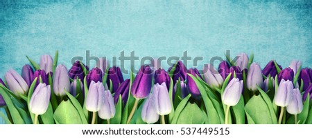 Bouquet of fresh tulips. Spring flowers. Floral border.