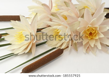 Bouquet of fresh water lilies and cattails  - stock photo