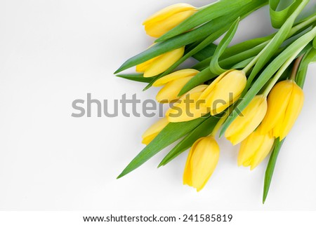 bouquet of fresh yellow tulips on white background (with easy removable text) - stock photo