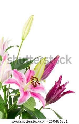 Bouquet of fuchsia pink stargazer lilies isolated on white background. - stock photo