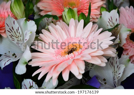 Bouquet of Gerbera daisies and Peruvian lilies  - stock photo