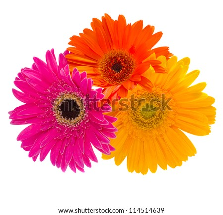 bouquet of gerbera flowers isolated on white - stock photo