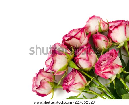 bouquet of hybrid colored roses isolated on a white - stock photo