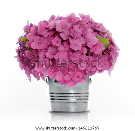 bouquet of hydrangea - stock photo