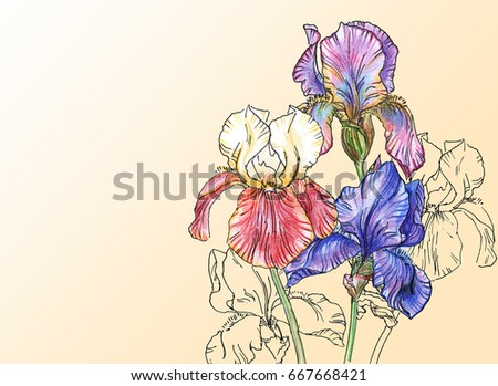 Iris template stock images royalty free images vectors bouquet of iris flowers black and white outline illustration with color pencils hand drawn painting pronofoot35fo Image collections