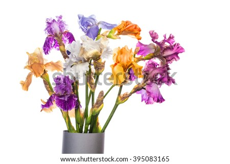 bouquet of iris flowers isolated on white background - stock photo