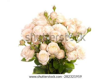 bouquet of isolated white roses on a white background - stock photo