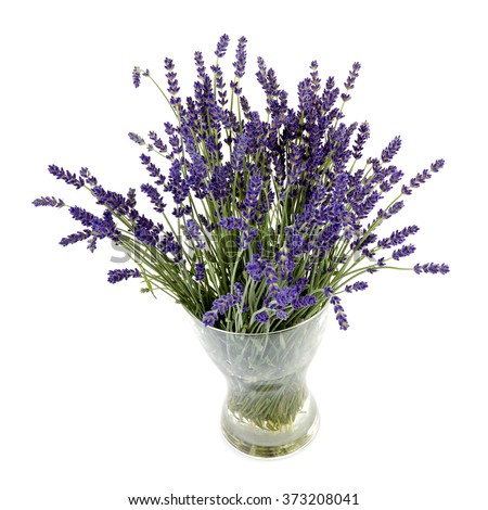Bouquet of lavender flowers in vase over white background
