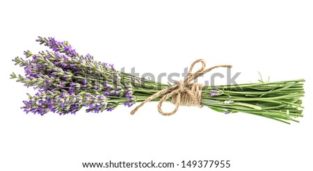 bouquet of lavender flowers isolated on white background - stock photo