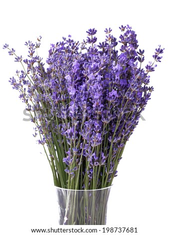 Bouquet of lavender in vase - stock photo