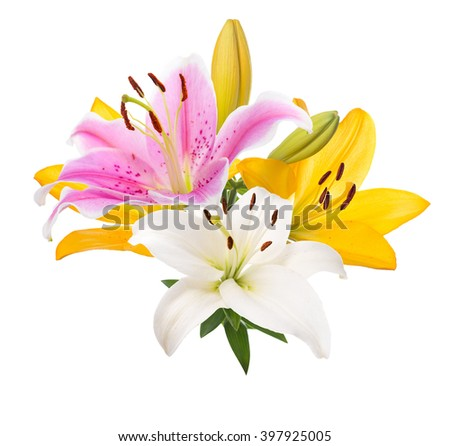 Bouquet of lilies of different colors. Isolated. - stock photo