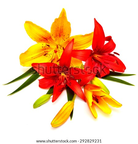 Bouquet of Lilies red and yellow flowers isolated on white background. The holiday greeting card colors. - stock photo