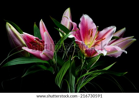 Bouquet of lilies with white-pink petals on a black background - stock photo