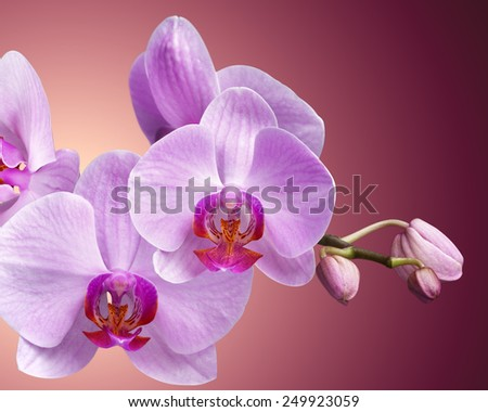 bouquet of magenta orchids on color background - stock photo