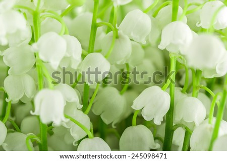 bouquet of may-lily on a green background - stock photo