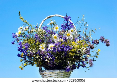 Bouquet of meadow flowers in a wicker basket on blue sky background. White daisies and purple violet flowers