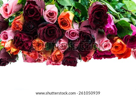 Bouquet of multi-colored roses isolated on white - stock photo