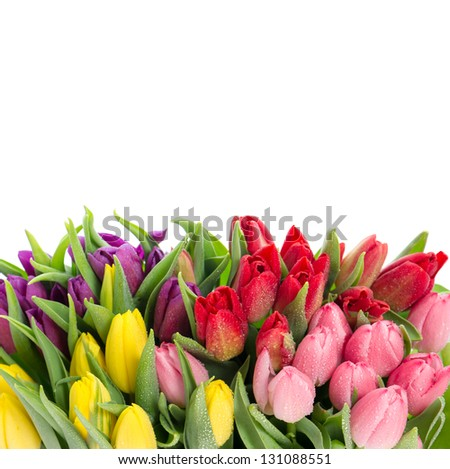 bouquet of multicolor tulips over white background. fresh spring flowers with water drops - stock photo
