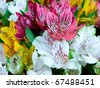Bouquet of multicolored alstroemeria flowers from above - stock photo