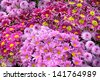 Bouquet of multicolored gerberas. Floral pattern. - stock photo