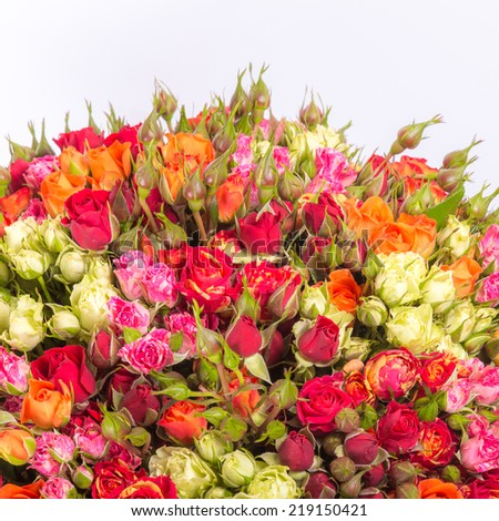 Bouquet of multicolored roses on white background - stock photo